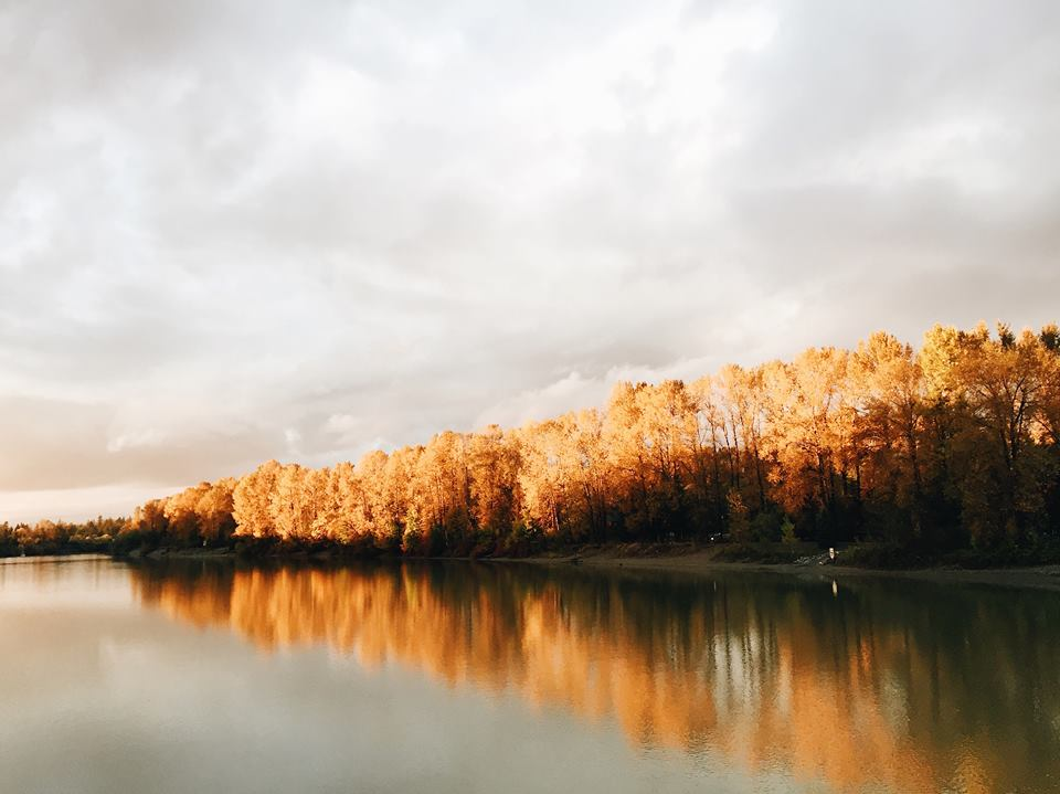 Landscape picture in the fall. The sky is bright but cloudy. The trees are all golden, lining a lake. The waters of the lake are still and reflect the treeline and sky.